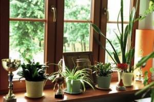 Окна из дерева в интерьере
